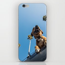 Dog under palm trees and blue skies iPhone Skin