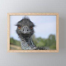 Emu Gaze Framed Mini Art Print