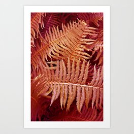 CORAL FERN POETRY Art Print