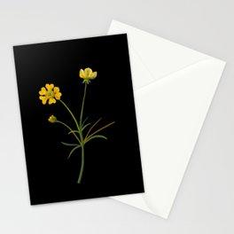Ranunculus Illyricus Mary Delany Vintage Botanical Floral Collage Delicate Paper Flowers Stationery Cards