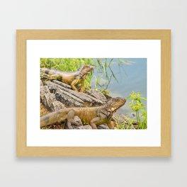 Iguanas at Shore of River Framed Art Print