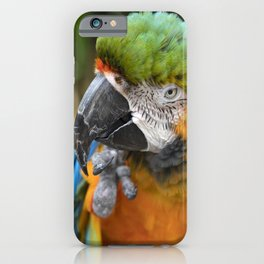 Portrait of a Macaw  iPhone Case