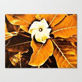 Tiare 'o Tahiti Canvas Print