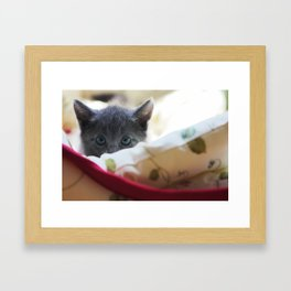 Shadow the Cat Framed Art Print