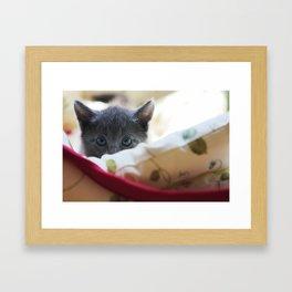 Shadow the Cat Framed Art Print
