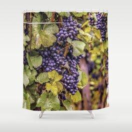 Newport Wine Vineyard and Grapes, Rhode Island Shower Curtain