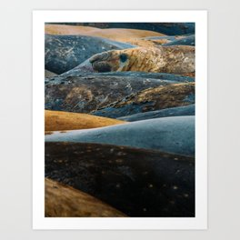 Elephant Seal Texture Art Print