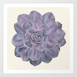 Purple Succulent Flower Hand-Drawn Illustration Art Print
