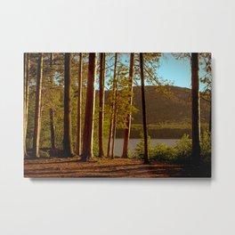 The Pines at Winona Metal Print