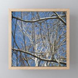 Crisp Cold Florida Morning Framed Mini Art Print