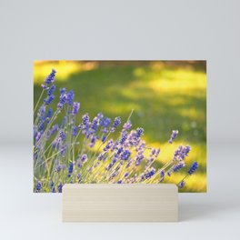 PRETTY LAVENDER GLOWS IN THE SUNSHINE IN THE GARDEN Mini Art Print
