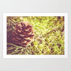 Conifer cone Art Print