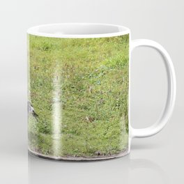 Canada Goose Chilling Next To Water Coffee Mug