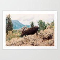 Moose 2 Art Print