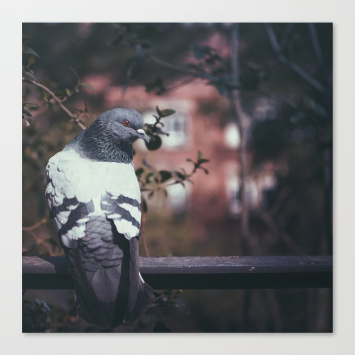 Pigeon of Barcelona Canvas Print