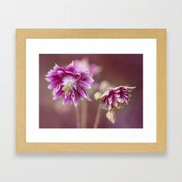 Light pink columbine flowers Framed Art Print