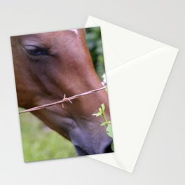 Tropical Island-Style Horse Eating Leaves Stationery Cards
