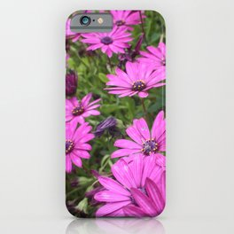 Daisies Spring In All Its Splendor iPhone Case