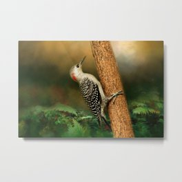 Red Bellied In Search of Food Metal Print