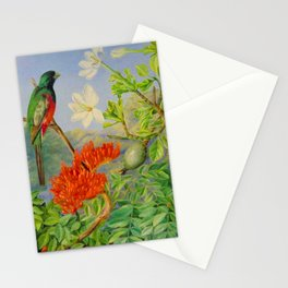 Two Flowering Shrubs of Natal and a Trogon - Marianne North 1882 Stationery Cards