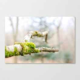 Branch in the Fall Canvas Print