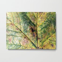 Autumn Leaf Metal Print