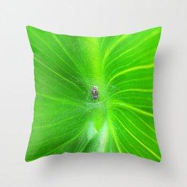 Spider 3149 Throw Pillow
