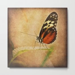 Antique Butterfly Metal Print