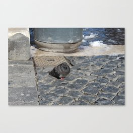 angry pidgeon on the ground Canvas Print
