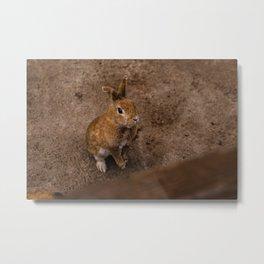 Adorable Bunny Portrait Metal Print