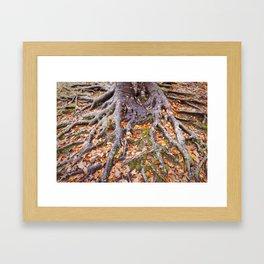 Beech Tree Roots Framed Art Print
