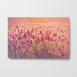 Crimson Clover Field Metal Print