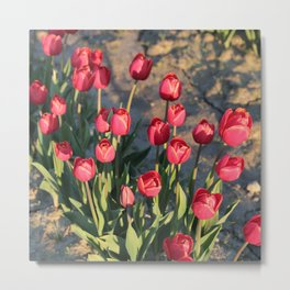 Red Tulips Square Metal Print