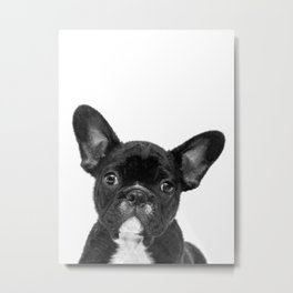 Black and White French Bulldog Metal Print