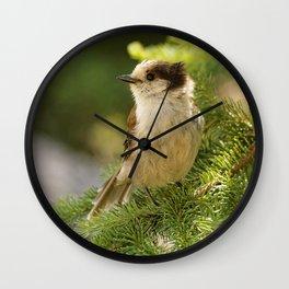 Profile of a Grey Jay / Whiskeyjack Wall Clock