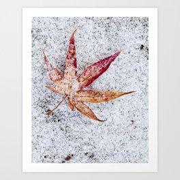 leaf and snow Art Print
