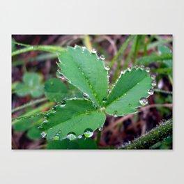 3 Leaf Clover Canvas Print