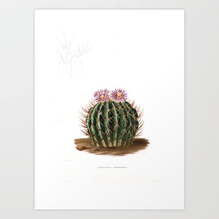 Cactus (1841) Art Print