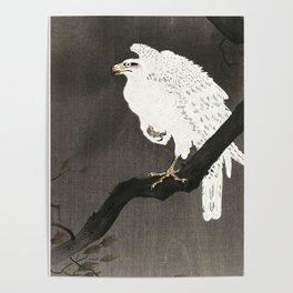 Koson Ohara - White Eagle on a Branch - Japanese Vintage Ukiyo-e Woodblock Painting Poster