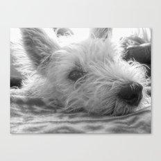 Westie puppy Canvas Print