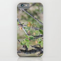 Little Leaves iPhone 6 Slim Case