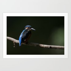 Kingfisher in the Shadows Art Print