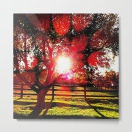 Apple Tree Sunshine Metal Print