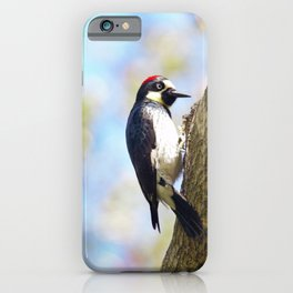 Acorn Woodpecker 2 by Reay of Light iPhone Case