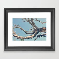Driftwood Ladder Framed Art Print