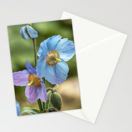 Meconopsis Poppies Stationery Cards