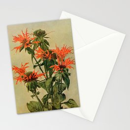 Vintage Print - Birds and Nature (1900) - Oswego Tea or Bee Balm Stationery Cards