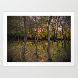 Forest, sunset, art photography at the bulgarian village Lisicite Art Print
