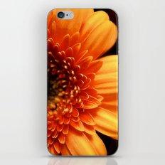 Natures Sun iPhone & iPod Skin