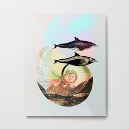Steno rostratus Metal Print